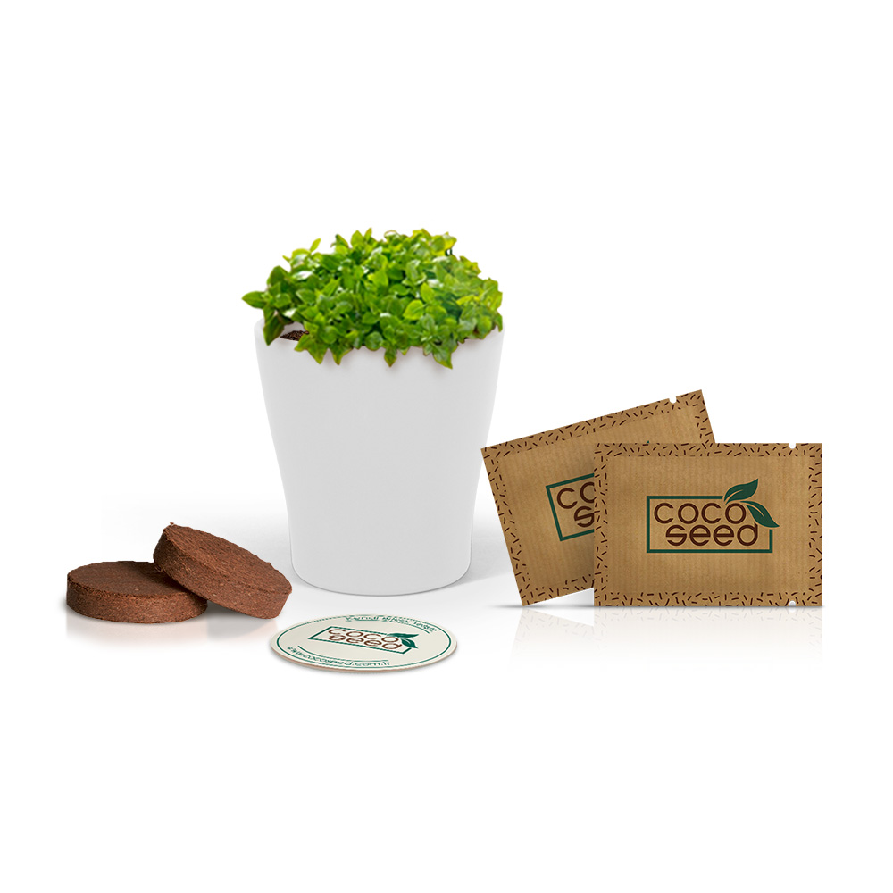 Cocoseed Bitki Yetiştme Kiti